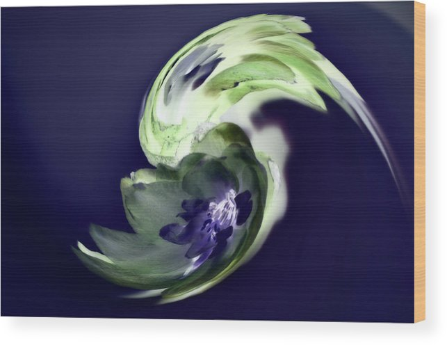 Abstract Phototgraphy Wood Print featuring the photograph Incana abstract 1 by Paulina Roybal
