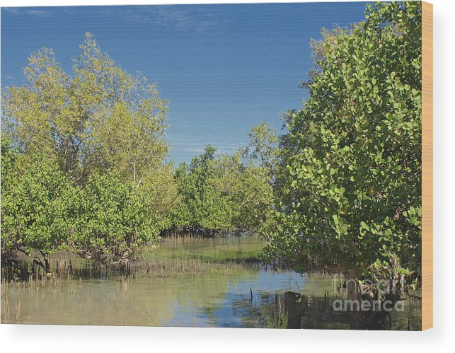 Africa Wood Print featuring the photograph mangroves in Madagascar 2 by Rudi Prott