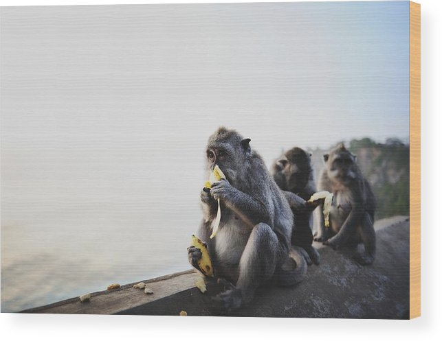 In A Row Wood Print featuring the photograph Monkeys Eating Bananas by Carlina Teteris