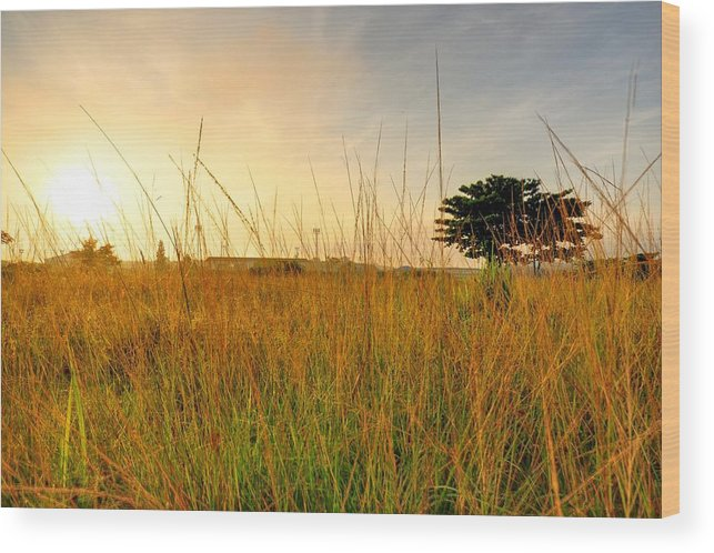 Scenics Wood Print featuring the photograph Morning Sun Shining Through The Tree by Primeimages