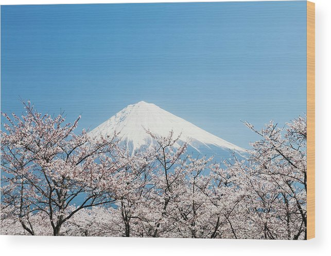 Scenics Wood Print featuring the photograph Mount Fuji & Cherry Blossom by Ooyoo