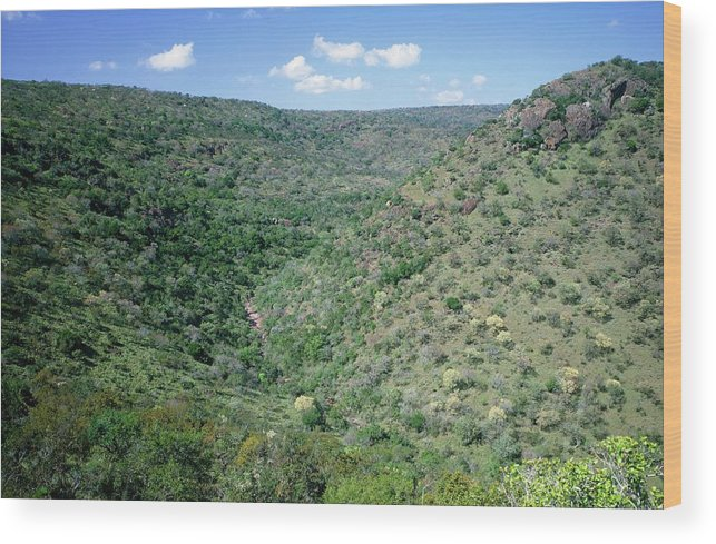 Swaziland Wood Print featuring the photograph Parkland Savannah by Sinclair Stammers/science Photo Library