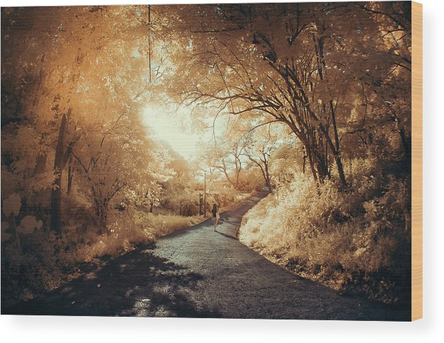Shadow Wood Print featuring the photograph Pathway To Wonderland by D3sign
