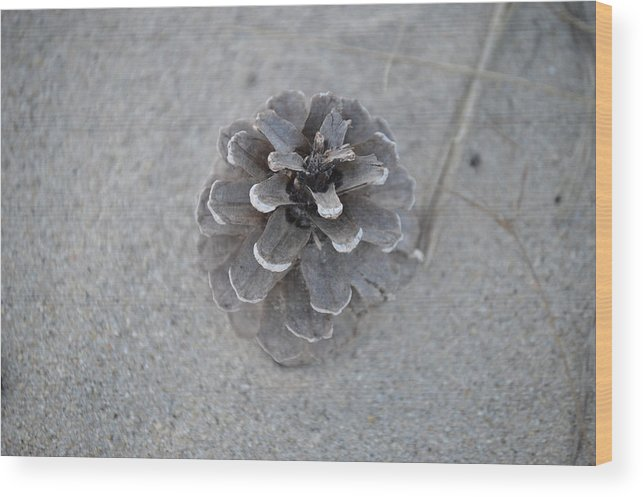 Pine Cone Wood Print featuring the photograph Pine Cone by Jessica Cruz