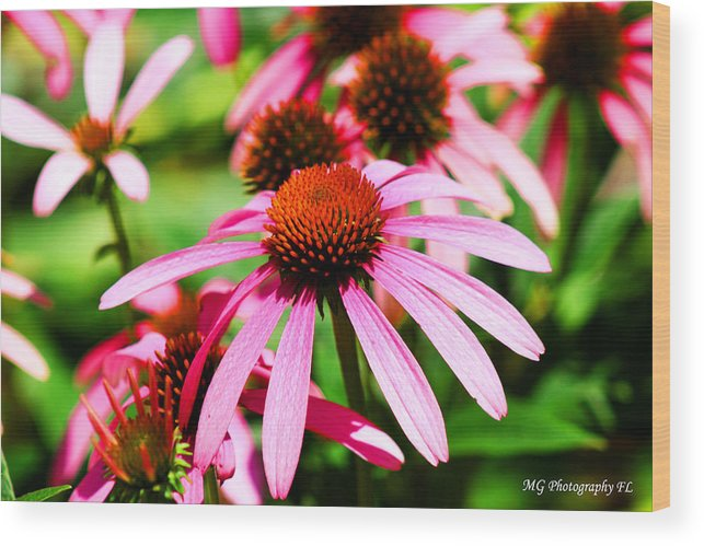 Pink Wood Print featuring the photograph Pink Beauty by Marty Gayler