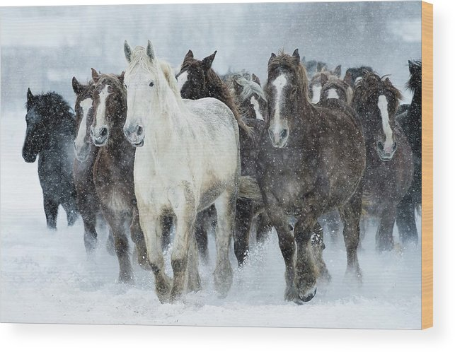 Horse Wood Print featuring the photograph Populations Of Horses by Makieni's Photo