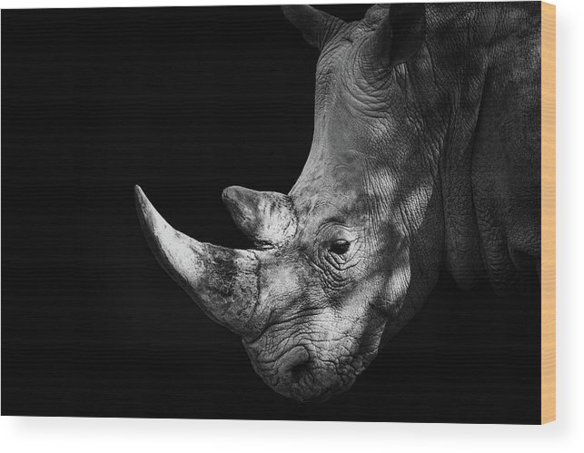 Horned Wood Print featuring the photograph Rhinoceros by Malcolm Macgregor