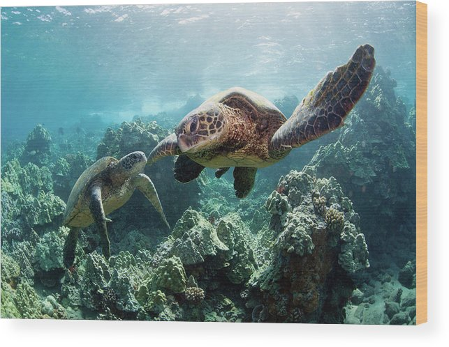 Underwater Wood Print featuring the photograph Sea Turtles by M Swiet Productions