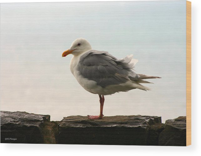 Photo Wood Print featuring the pyrography Seagull by Ruben Flanagan