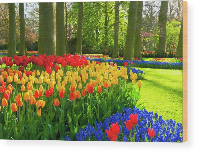 Flowerbed Wood Print featuring the photograph Spring Flowers In A Park by Jacobh