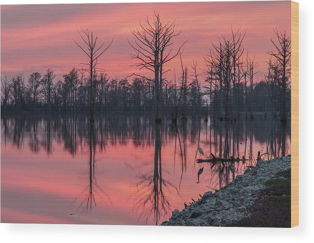 Outdoors Wood Print featuring the photograph Standing Guard by Larrybraunphotography.com
