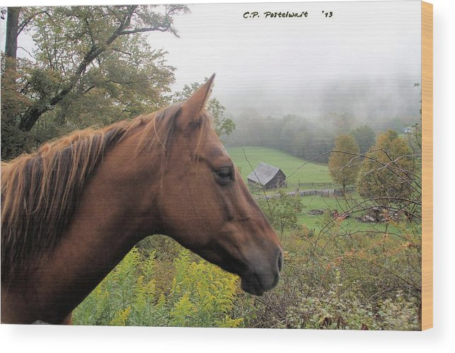 Fairview Farm Wood Print featuring the photograph Sugar watching over her Home by Carolyn Postelwait