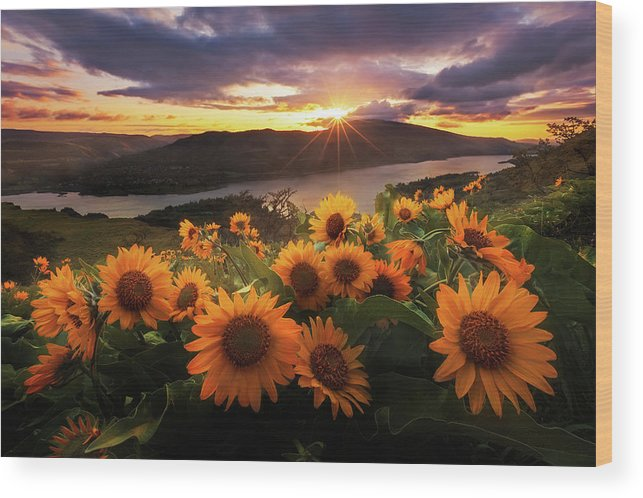 Outdoors Wood Print featuring the photograph Sunflower Field by Jeremy Cram Photography