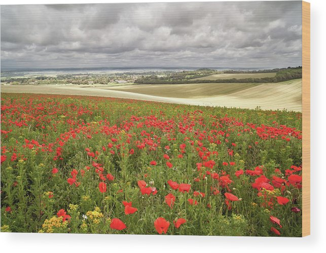 Scenics Wood Print featuring the photograph Sweeping Golden Fields by Getty Images