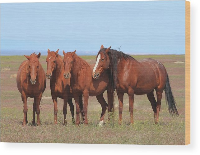 Horse Wood Print featuring the photograph The Girls Club by Gene Praag