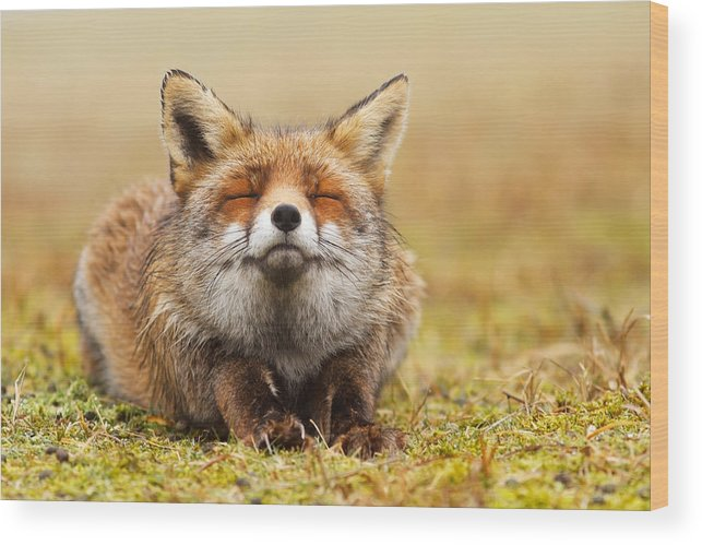Fox Wood Print featuring the photograph The Smiling Fox by Roeselien Raimond