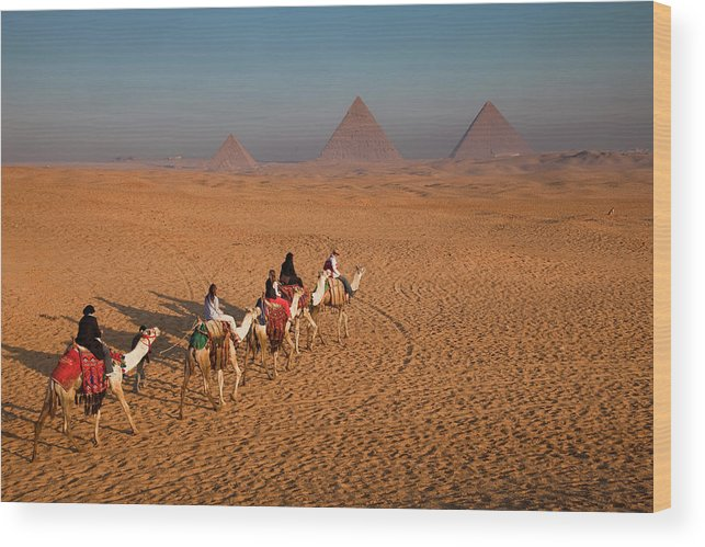 Working Animal Wood Print featuring the photograph Tourists On Camels & Pyramids Of Giza by Richard I'anson