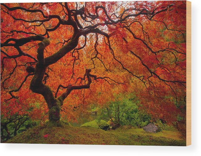 Portland Wood Print featuring the photograph Tree Fire by Darren White