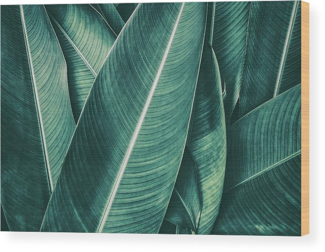 Spa Wood Print featuring the photograph Tropical Palm Leaf, Dark Green Toned by Pernsanitfoto