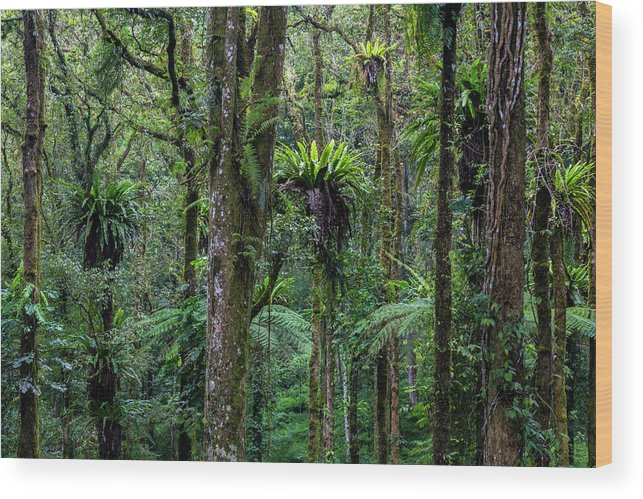 Tropical Rainforest Wood Print featuring the photograph Tropical Rain Forest by Gavriel Jecan