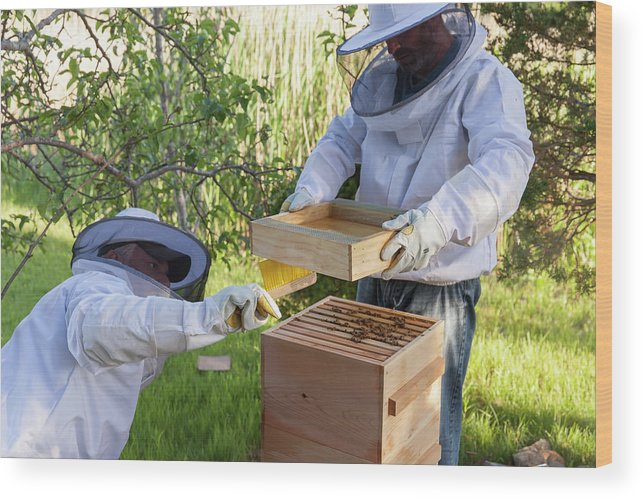 Brush Wood Print featuring the photograph Two Beekeepers Removing The Feeder Tray by Lucie Wicker