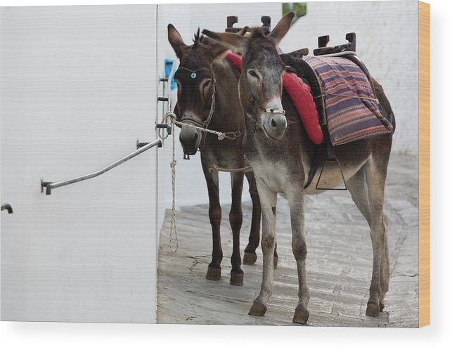Working Animal Wood Print featuring the photograph Two Donkeys Tethered In The Street In by Martin Child