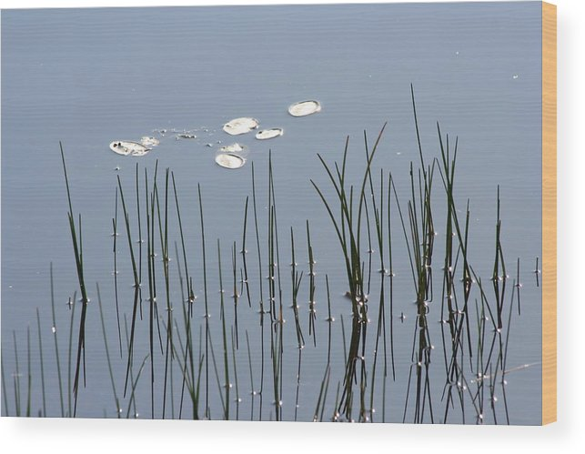 Water Lilies Wood Print featuring the photograph Water Lilies by Dr Carolyn Reinhart