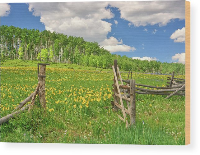 Tranquility Wood Print featuring the photograph Welcome To Heaven On Earth by Amy Hudechek