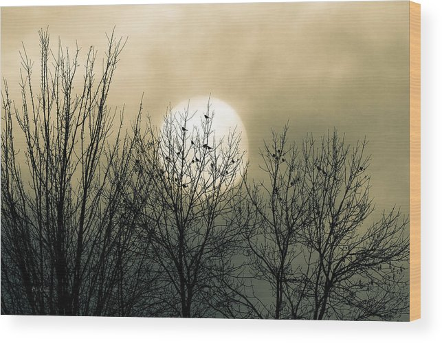 Winter Wood Print featuring the photograph Winter Into Spring by Bob Orsillo