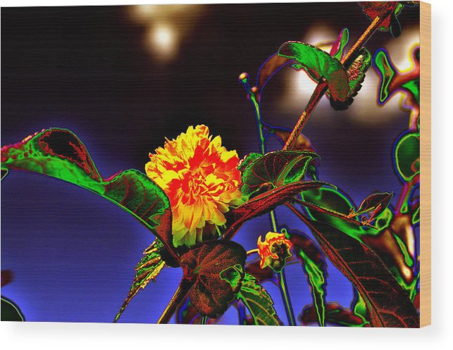 Background Wood Print featuring the photograph Yellow Queen on the morning dream by Adrian Bud