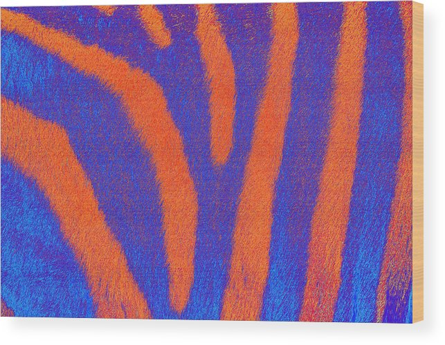 Zebra Wood Print featuring the photograph Zebra of a Different Stripe by Richard Henne