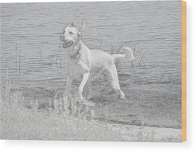 Wood Print featuring the photograph Happy Dog by Katrina Johns