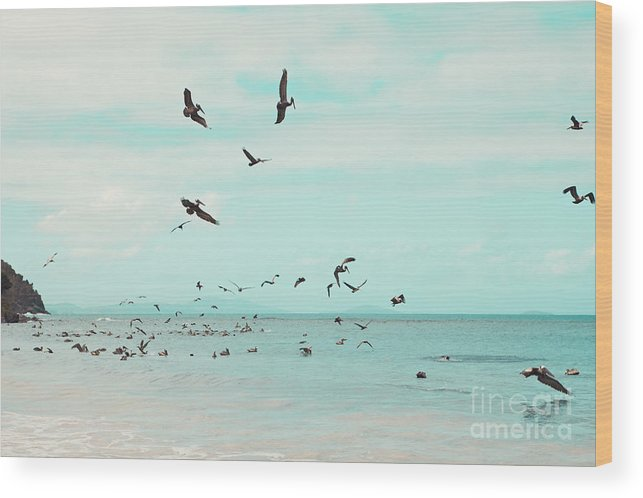 Pelicans Wood Print featuring the photograph Birds in Flight by Kim Fearheiley