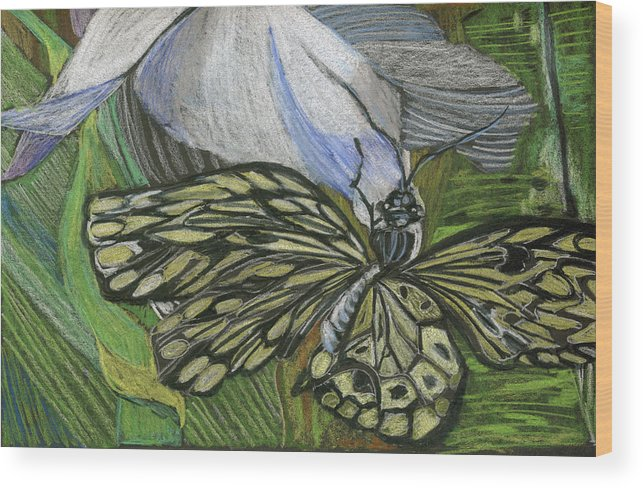 Butterfly Wood Print featuring the drawing Just Hanging Out by Mindy Newman