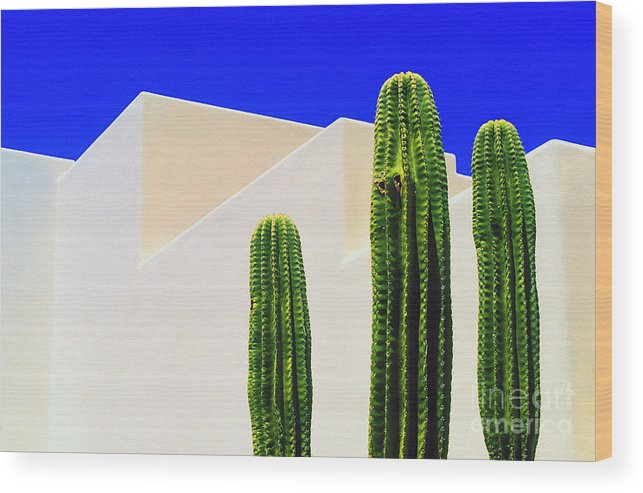 Cactus Wood Print featuring the photograph Saguaros by Gib Martinez