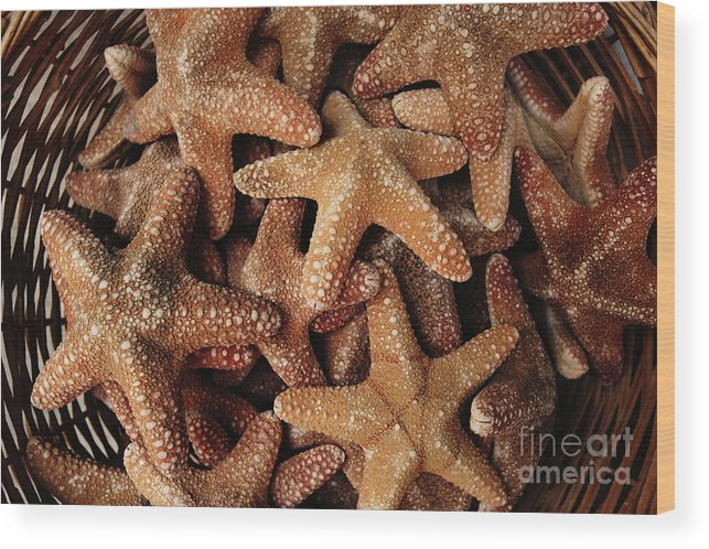 Assortment Wood Print featuring the photograph Starfish by Steve Outram