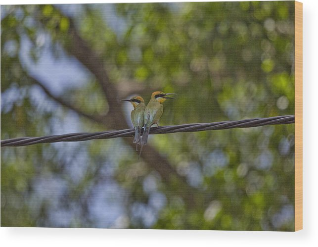 Rainbow Bee-eaters Wood Print featuring the photograph You Watch My Back And I Will Watch Yours by Douglas Barnard
