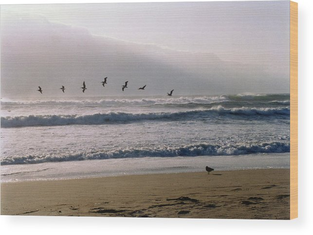 Seascape Wood Print featuring the photograph Pelican Brief by Brande Barrett