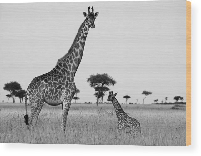Africa Wood Print featuring the photograph Meet My Little One by Michele Burgess