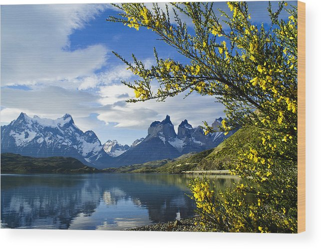 Patagonia Wood Print featuring the photograph Springtime in Torres del Paine by Michele Burgess