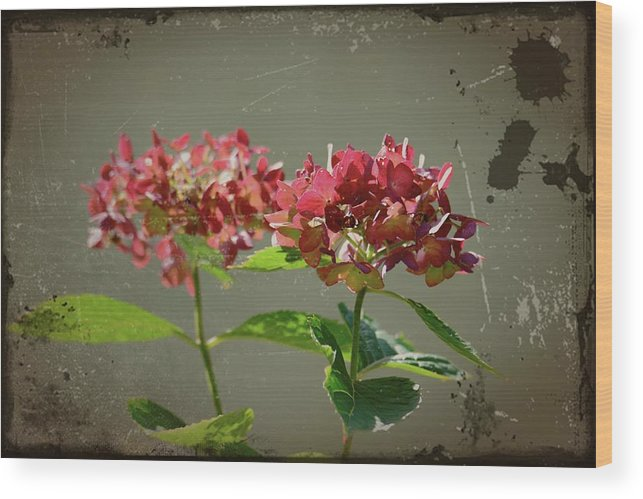 Antique Picture Of Flowers Wood Print featuring the photograph An Old Picture by Randy J Heath