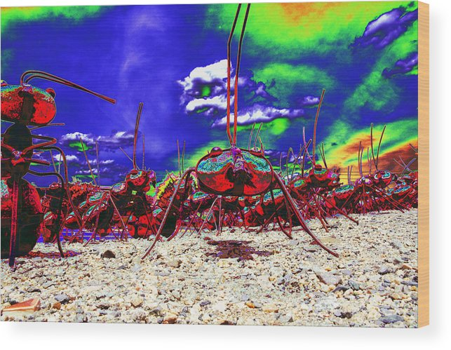 Ants Wood Print featuring the photograph Ant Invasion by Richard Henne