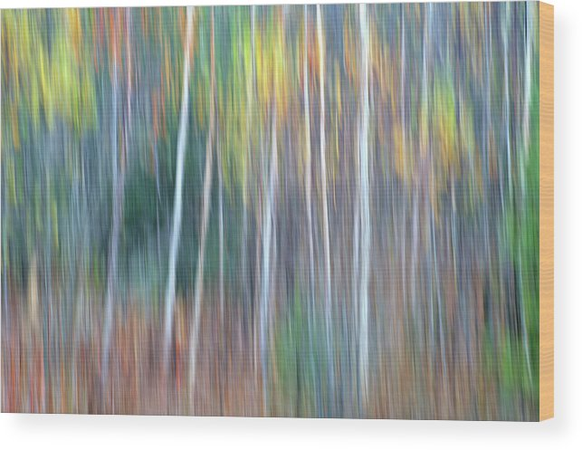 Forest Pastels Form An Autumn Impression Wood Print featuring the photograph Autumn Impression by Bill Morgenstern