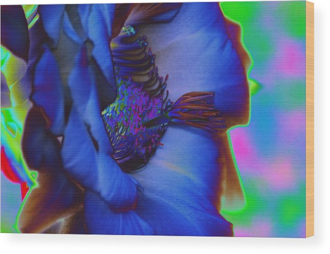 Hibiscus Wood Print featuring the photograph Blue Hibiscus by Richard Henne