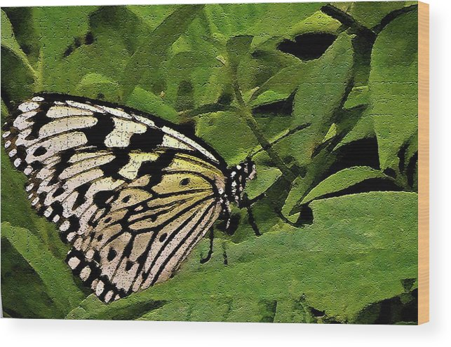 Butterfly Wood Print featuring the photograph Butterfly Fresco by Mindy Newman