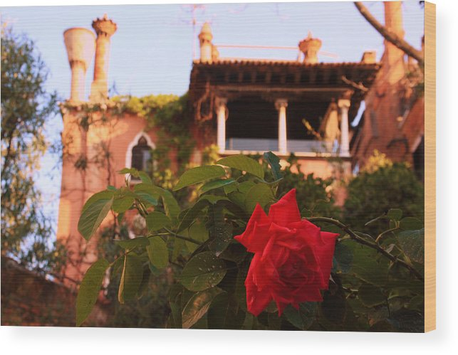 Venice Wood Print featuring the photograph Ca' Dario in Venice with Rose by Michael Henderson