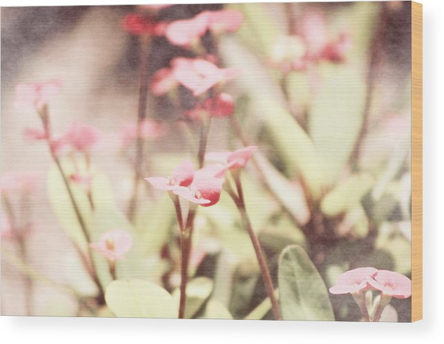 Prism Pink Wood Print featuring the photograph Country Memories in Prism Pink by Colleen Cornelius
