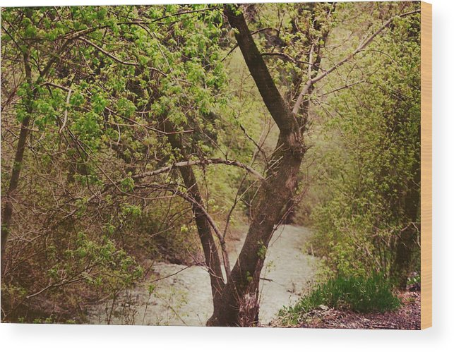 Dreamy Wood Print featuring the photograph Cozy Stream in American Fork Canyon Utah by Colleen Cornelius