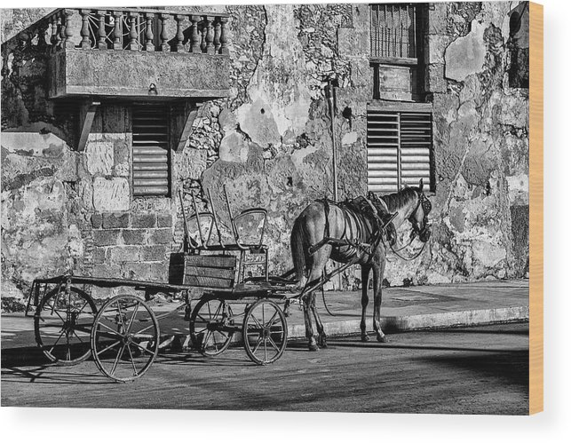 Cuban Horse Power; Cuban; Horse; Power; Horse And Carriage; Carriage; Hp; Cuba; Photography & Digital Art; Photography; Photo; Photo Art; Art; Digital Art; 2bhappy4ever; 2bhappy4ever.com; 2bhappy4evercom; Tobehappyforever; Wood Print featuring the photograph Cuban Horse Power BW by Erron
