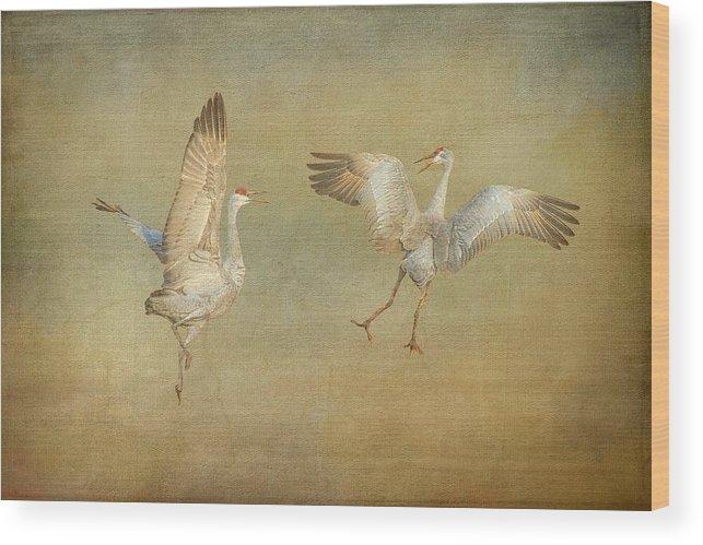 Nature Wood Print featuring the photograph Dance Ritual II, Sandhill Cranes by Zayne Diamond Photographic
